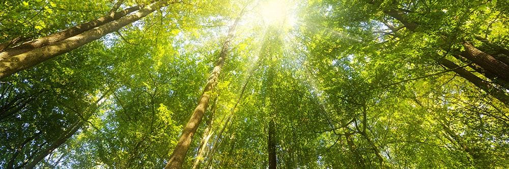 iocf-trees2